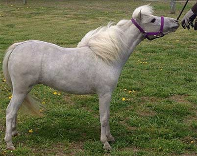 http://jandfminiatures.com/mares-files/2017/Minners%20Swirl%20Of%20Hope/Hope-1-sm.jpg